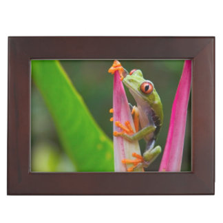 Red-eye tree frog, Costa Rica 2 Keepsake Box