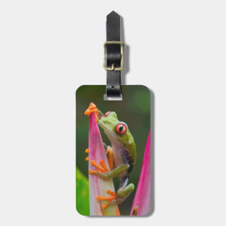 Red-eye tree frog, Costa Rica 2 Luggage Tag