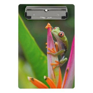 Red-eye tree frog, Costa Rica 2 Mini Clipboard