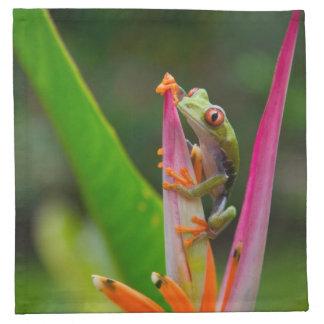 Red-eye tree frog, Costa Rica 2 Napkin