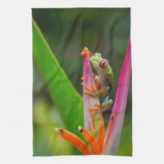 Red-eye tree frog, Costa Rica 2 Tea Towel