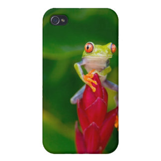 Red-eye tree frog, Costa Rica Case For iPhone 4