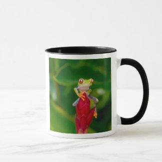 Red-eye tree frog, Costa Rica Mug