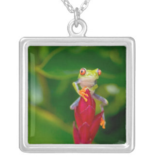 Red-eye tree frog, Costa Rica Silver Plated Necklace