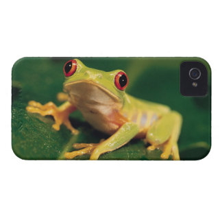 Red eye tree frog iPhone 4 covers
