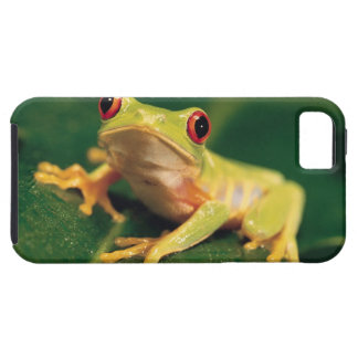 Red eye tree frog iPhone 5 case
