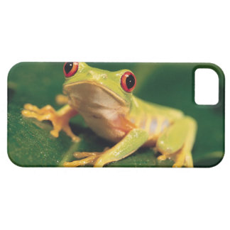 Red eye tree frog iPhone 5 cases