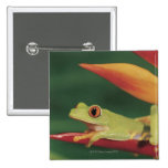 Red eye tree frog sitting on flower 15 cm square badge