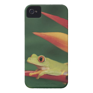 Red eye tree frog sitting on flower iPhone 4 Case-Mate case