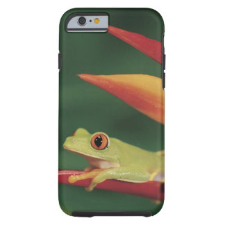 Red eye tree frog sitting on flower tough iPhone 6 case