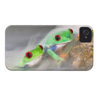 Red Eye Treefrog in the mist, Agalychinis 2 iPhone 4 Cover