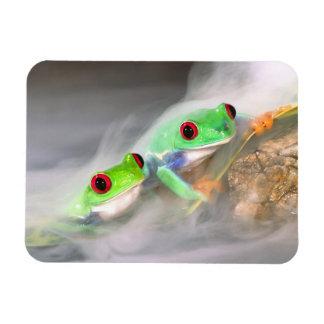 Red Eye Treefrog in the mist, Agalychinis 2 Rectangular Photo Magnet