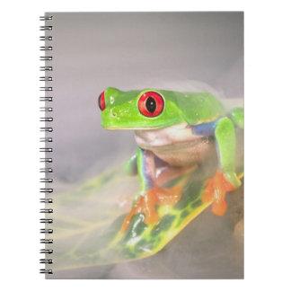 Red Eye Treefrog in the mist, Agalychinis Notebook