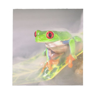 Red Eye Treefrog in the mist, Agalychinis Notepad