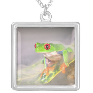 Red Eye Treefrog in the mist, Agalychinis Silver Plated Necklace