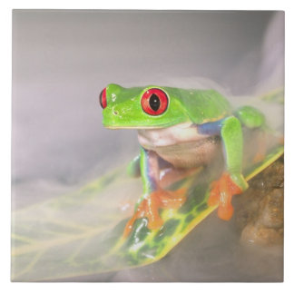 Red Eye Treefrog in the mist, Agalychinis Tile