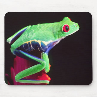 Red Eye Treefrog on a Bromeliad, Agalychinis Mouse Mat