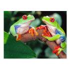Red Eye Treefrog Pair, Agalychinis callidryas, Postcard