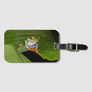 Red Eyed Gaudí Frog Luggage Tag