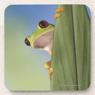 Red Eyed Tre Frog Peeking From Behind a Leaf Coaster