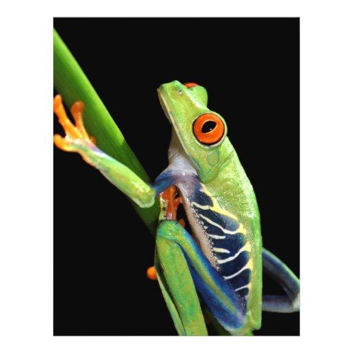 red eyed tree frog 21.5 cm x 28 cm flyer