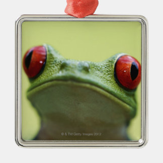 Red-eyed tree frog (Agalychnis callidryas) 2 Christmas Ornament