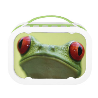 Red-eyed tree frog (Agalychnis callidryas) 2 Lunch Box