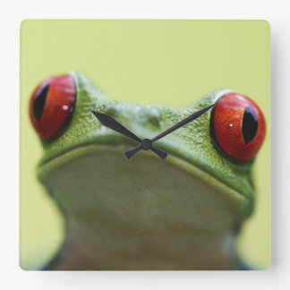 Red-eyed tree frog (Agalychnis callidryas) 2 Square Wall Clock