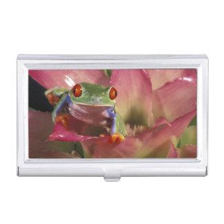 Red-eyed tree frog Agalychnis callidryas) Business Card Holder