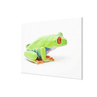 Red-Eyed Tree Frog (Agalychnis Callidryas) Canvas Print