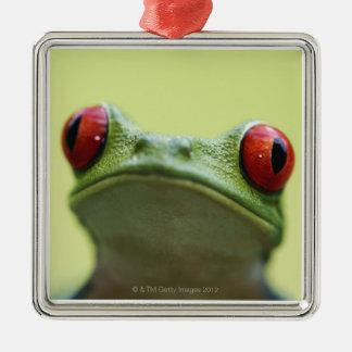 Red-eyed tree frog (Agalychnis callidryas) Christmas Ornament