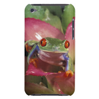 Red-eyed tree frog Agalychnis callidryas) iPod Case-Mate Case