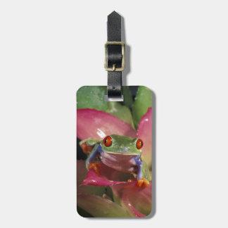 Red-eyed tree frog Agalychnis callidryas) Luggage Tag