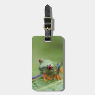 Red-eyed tree frog (Agalychnis callidryas) Luggage Tag