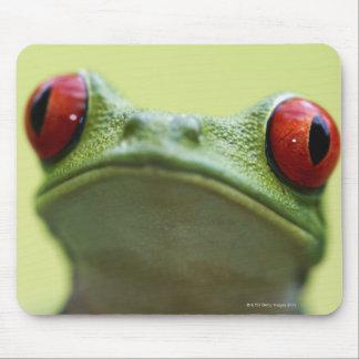 Red-eyed tree frog (Agalychnis callidryas) Mouse Pad