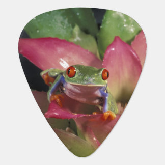 Red-eyed tree frog Agalychnis callidryas) Plectrum
