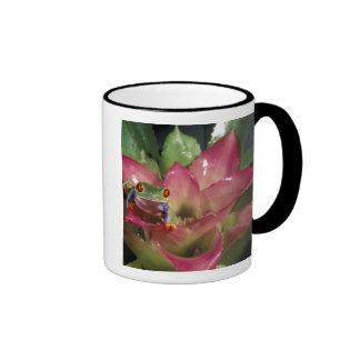 Red-eyed tree frog Agalychnis callidryas) Ringer Mug