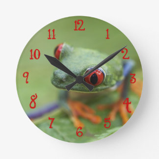 Red-eyed tree frog (Agalychnis callidryas) Round Clock