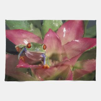 Red-eyed tree frog Agalychnis callidryas) Tea Towel