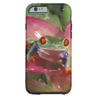 Red-eyed tree frog Agalychnis callidryas) Tough iPhone 6 Case