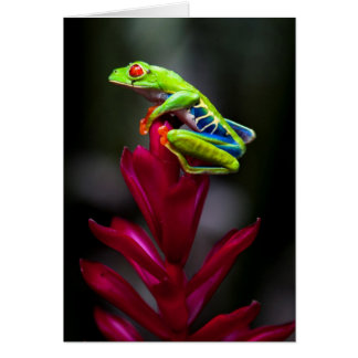 Red-eyed Tree Frog Card