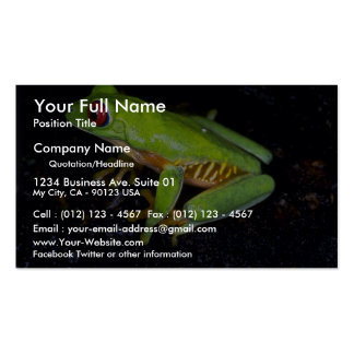 Red-eyed tree frog, Costa Rica Business Card