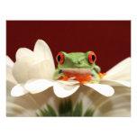 red eyed tree frog custom invitations