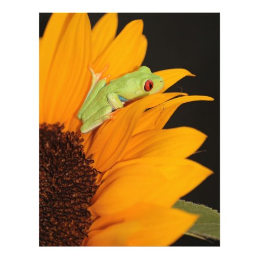 red eyed tree frog personalized flyer