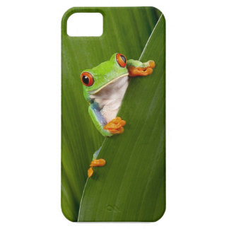 Red eyed tree frog iPhone 5 case