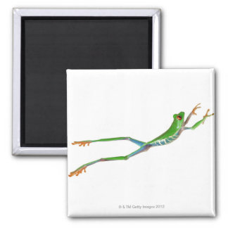 Red eyed tree frog jumping square magnet