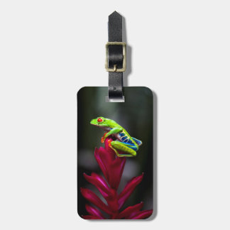 Red-eyed Tree Frog Luggage Tag