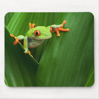 Red eyed tree frog muis matten