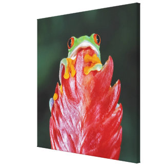 Red-Eyed Tree Frog on Leaf Canvas Print