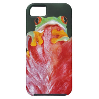 Red-Eyed Tree Frog on Leaf iPhone 5 Covers